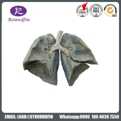 High Quality Dissection the larynx silicone specimens for medical teaching