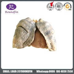 Dissection the larynx silicone specimens for medical teaching Suppliers