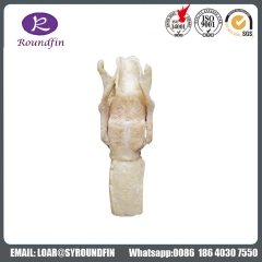 Advanced Dissection the larynx silicone specimens for medical teaching Online