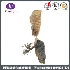 Professional Dissection the larynx silicone specimens for medical teaching Suppliers